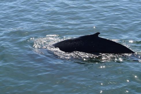 humpback back