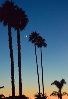 Moon between Palm trees