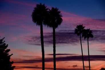 Palm sunset