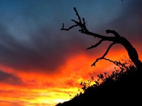 Intense Shell Sunset