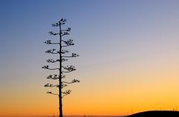 Bird on top of yucca
