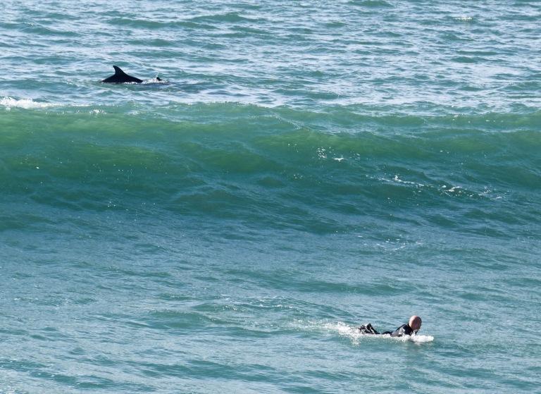 Dolphin Drop.jpg